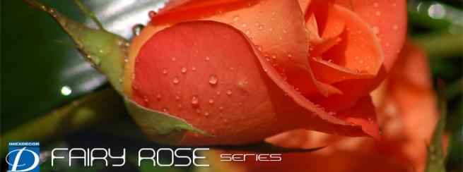 FAIRY ROSE series